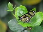 butterfly-31-1349067-1280x960