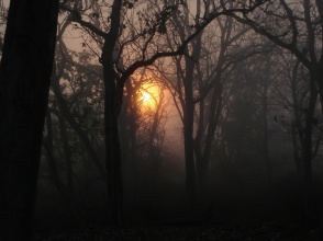 eerie-forest-2-1367266-1280x960