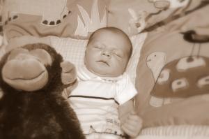 sleepy-monkey-2-1384674-1279x850